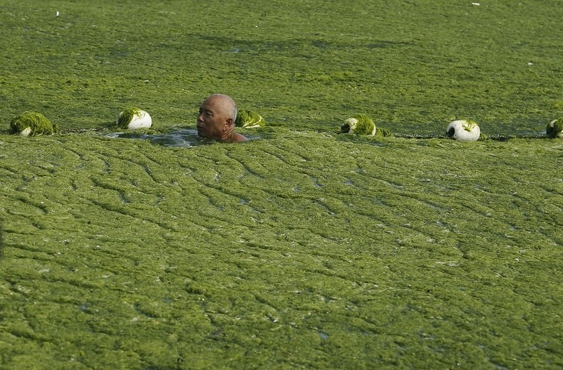 algae-china-beach-3