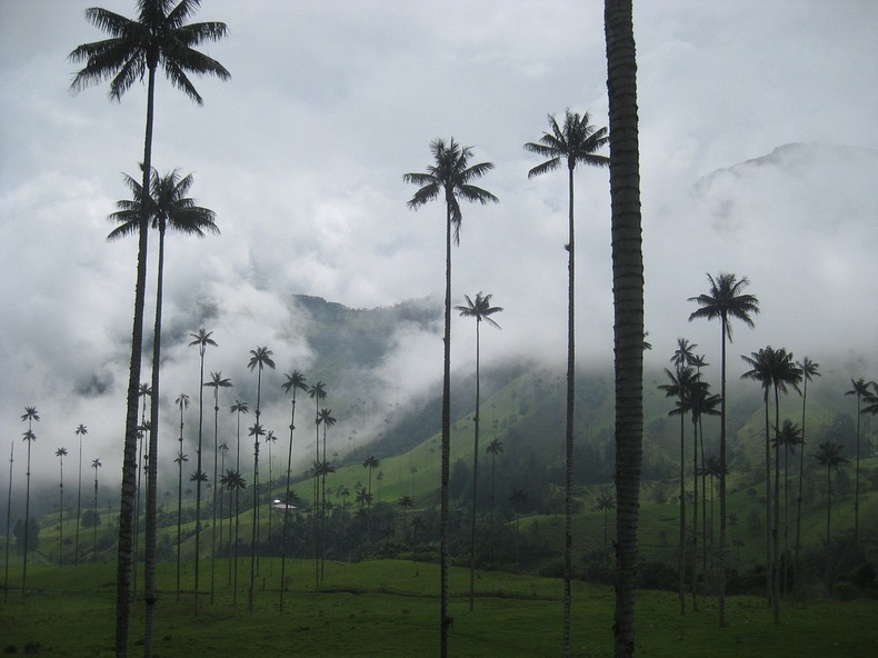 cocora-valley-9