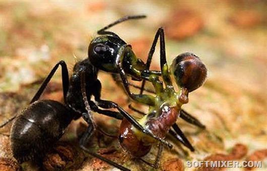 ant(2)