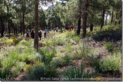 5798 Pico las Nieves-Temisas