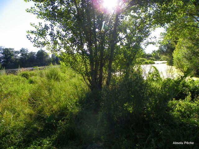 Loire rive droite en aval de Marclopt photo #1238