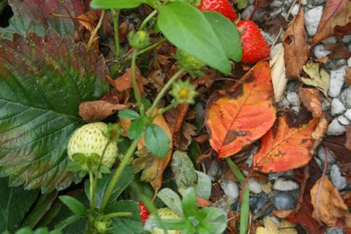 20091002 (1) (Small)