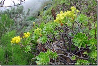 1991 Bº Pasadera-Roque Jincado(Bejeque arbóreo)