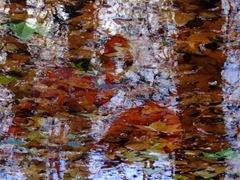 REFLECTION 10