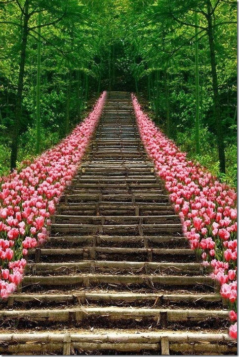 Path-of-Pink-Tulips
