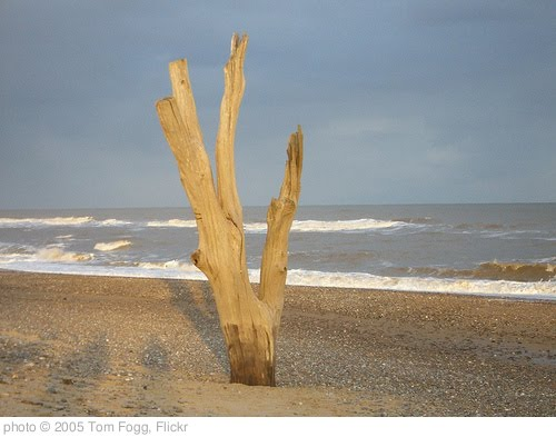 'Covehithe' photo (c) 2005, Tom Fogg - license: http://creativecommons.org/licenses/by-nd/2.0/