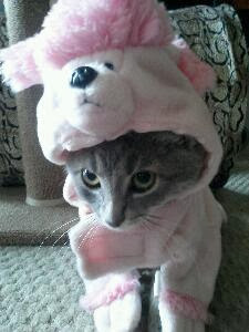 Gray tabby cat in pink poodle costume