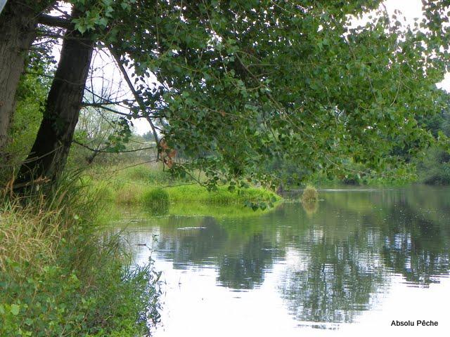 La Loire à Balbigny photo #397