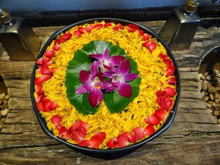 Flori Thailanda