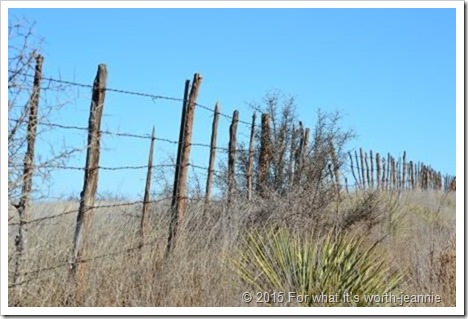 Texas fence row