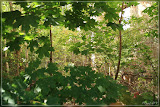 der Wald im Haus