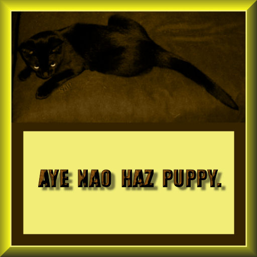 "black kitten on a brown cushion w the caption ""Aye nao haz puppy"" [that's I no have puppy.""]"