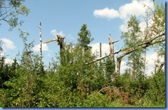 2214 Manitoba Lake Audy Rd West Riding Mountain National Park - recent tree damage