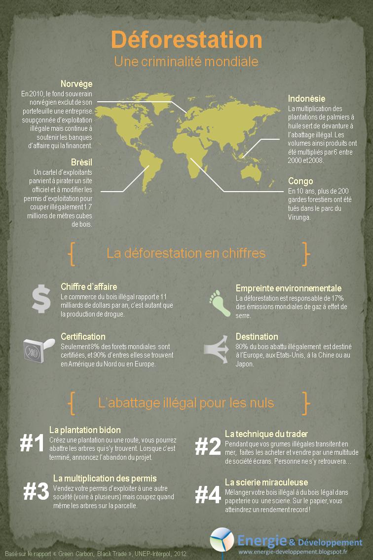 Infographie : déforestation illégale, blanchiment du bois et criminalité organisée
