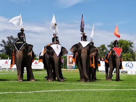 14. Elefanti la parada.JPG