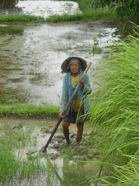 balinese lady, bali farming