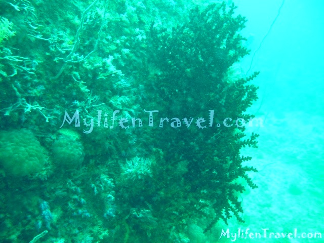 Koh Lipe Diving 31