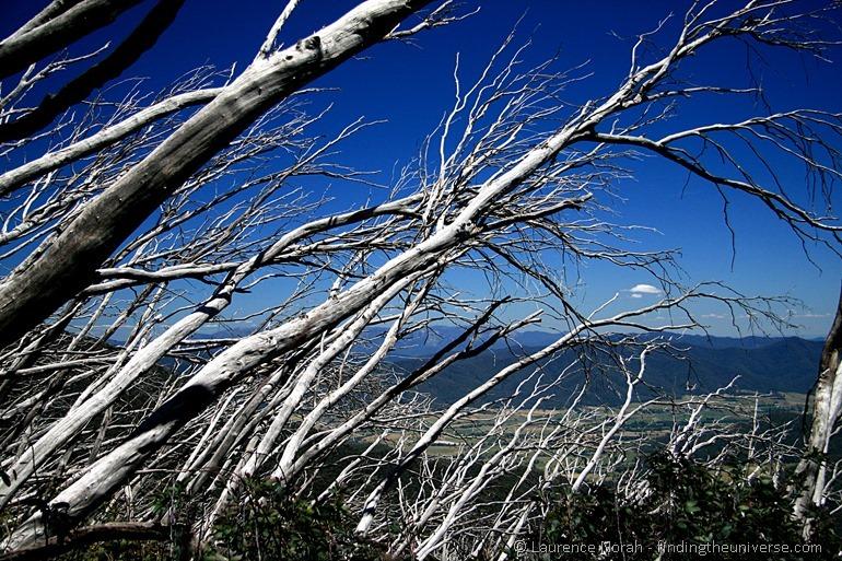 Snow Gums on Mount Bogong - Victoria - Australia