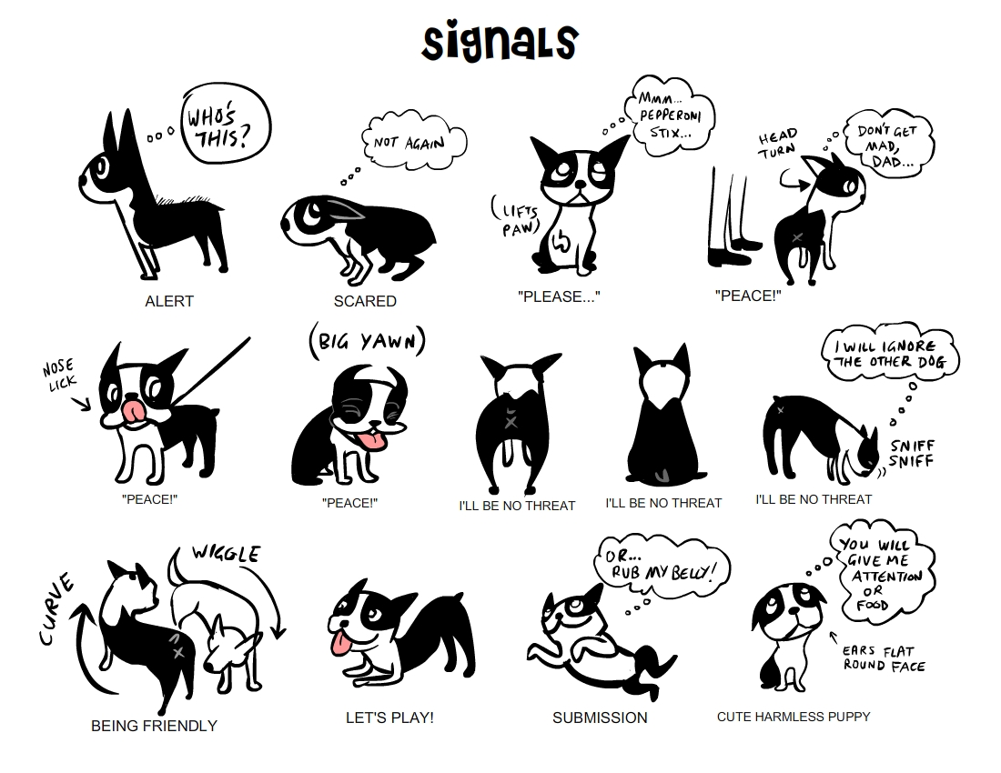 Signals, starring Boogie the Boston Terrier