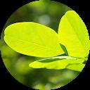 Green Inner Peace