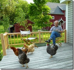 Chickens on porch