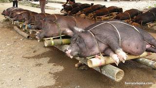 El arte de empaquetar cerdos con bambú.