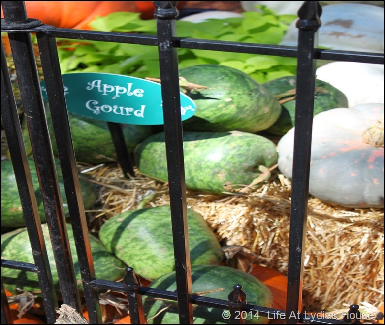 Dallas Arboretum - pumpkin festival-apple gourd