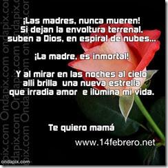 madres fallecidad (39)