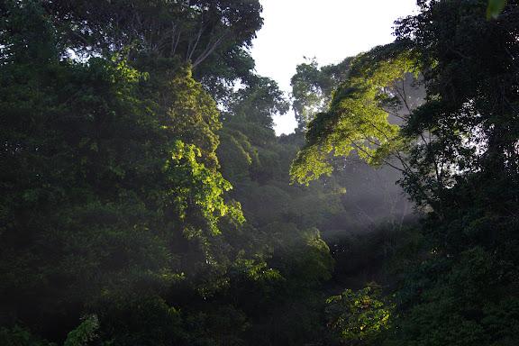 Lumières matinales. Les Carbets de Coralie (Crique Yaoni), 31 octobre 2012. Photo : J.-M. Gayman
