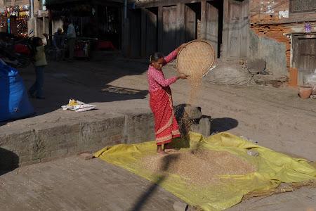 Treierat orez