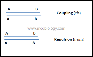 Coupling and repulsion