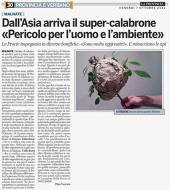 Allarme sui giornali italiani per nidi di calabrone gigante asiatico (2011)