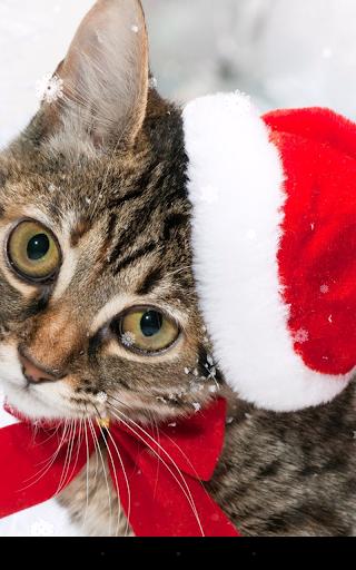 mod Christmas Cat Live Wallpaper 2.8.1 screenshots 4