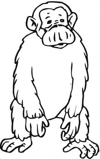 chimpances dibujos para colorear
