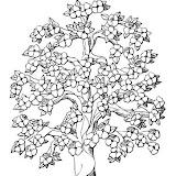 arbol-en-flor-9996.jpg