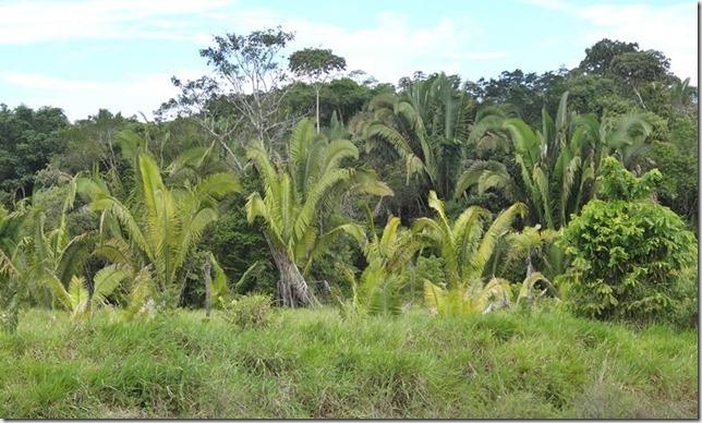 BR-319_Humaita_Manaus_Day_1_DSC05262