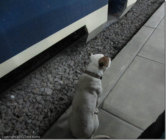 Train station dog on duty