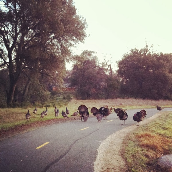 bike trail turkeys