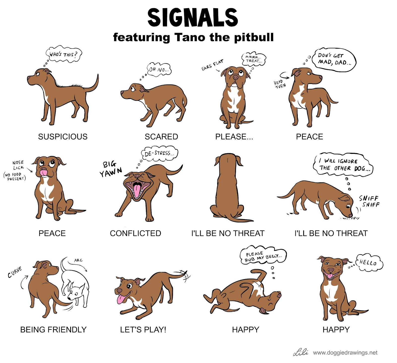 Signals, featuring Tano the pitbull