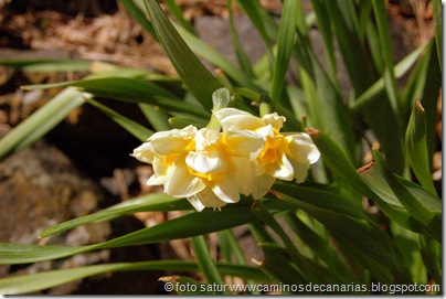 2272 C. Tejeda-Siberia-Bº Mina(Narcisos)