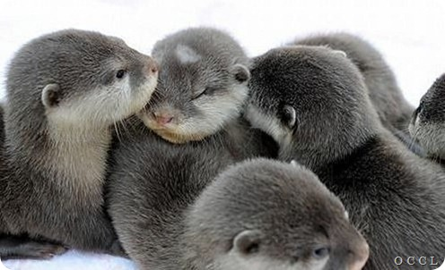 otter-affection