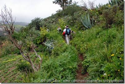 7809 Cruz Tejeda-Teror(Montaña Valaero)
