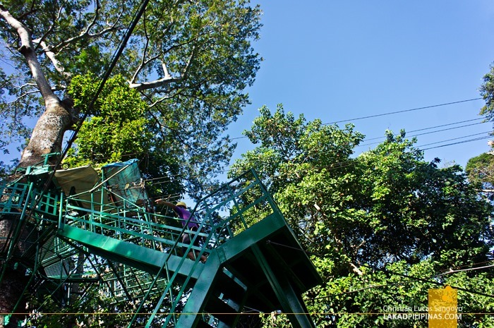 The Tree Tops at Subic's Tree Top Adventure