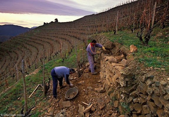 Vinya de l'Ermita, celler Alvaro Palacios, DOQ PrioratTorroja, Priorat, Tarragona2004.01