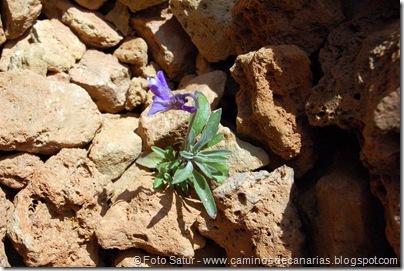 024 Violeta del Teide