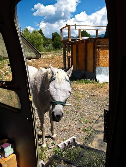 Horsey Begs for Snack