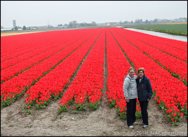 Holland Flower Fields 13