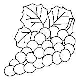 uvas-4.jpg