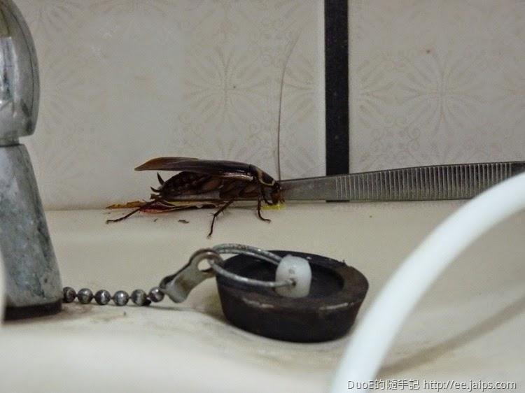蟑螂吃光一點絕