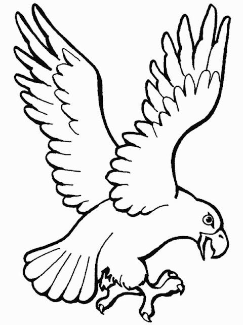 Dibujo De Aguila